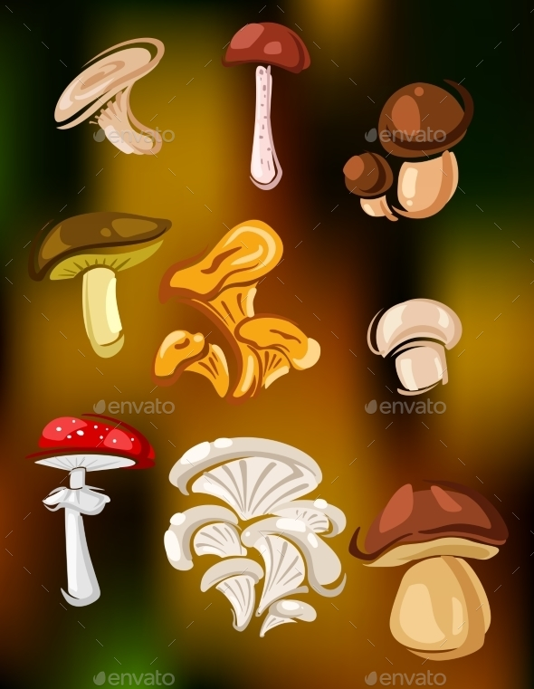 Mushrooms and Fungi - Food Objects