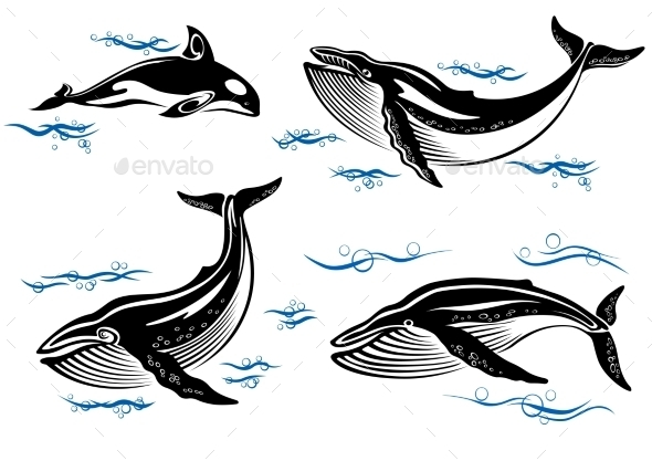 Cartoon Sea Whales - Animals Characters