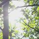 Leaf & Sunshine - VideoHive Item for Sale