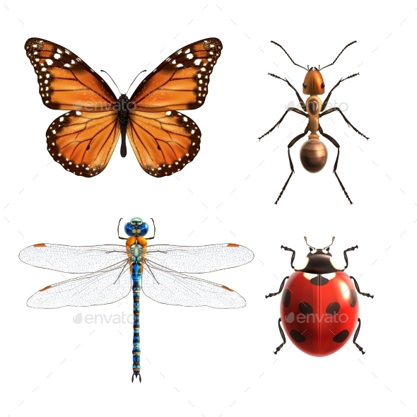 Insects Set - Animals Characters