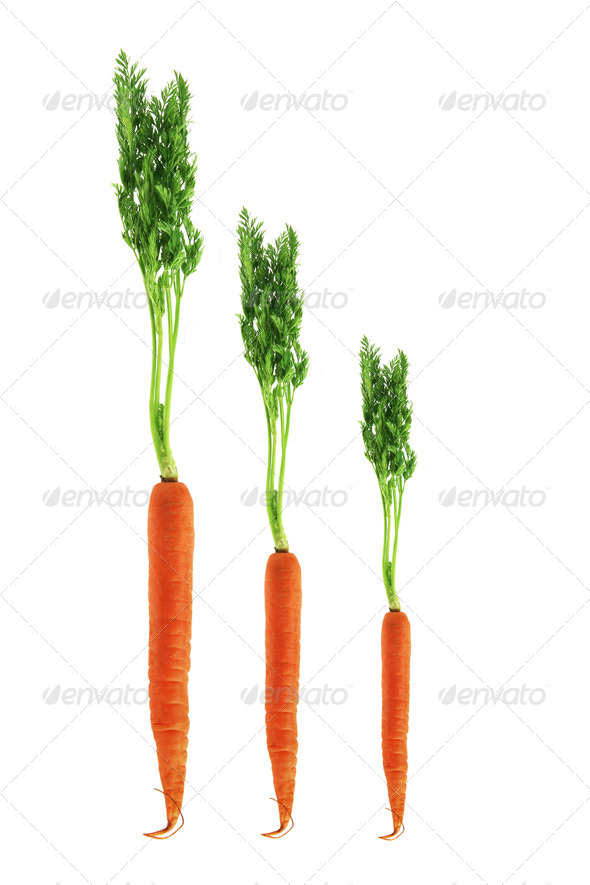 Carrots - Stock Photo - Images