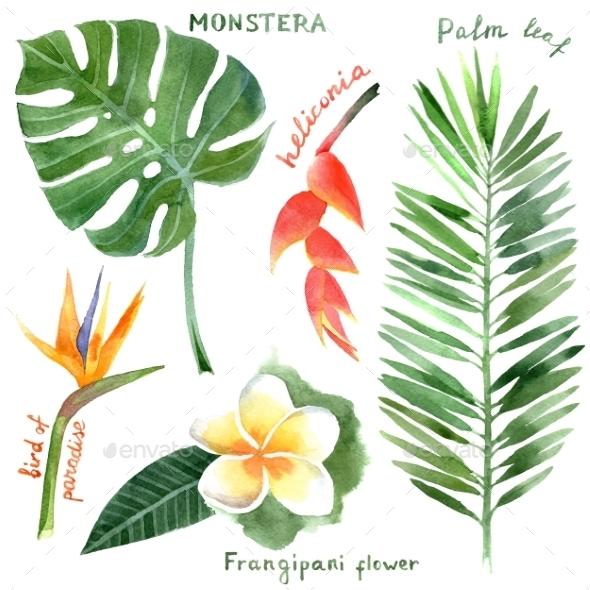 Tropical Plants - Flowers & Plants Nature