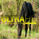 Horse 3 - VideoHive Item for Sale