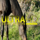 Horse 9 - VideoHive Item for Sale
