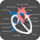 Heart Anatomy - GraphicRiver Item for Sale