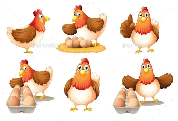 Six Hens - Animals Characters