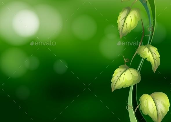 Vine Background - Flowers & Plants Nature