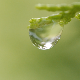 A Dew of Life - VideoHive Item for Sale