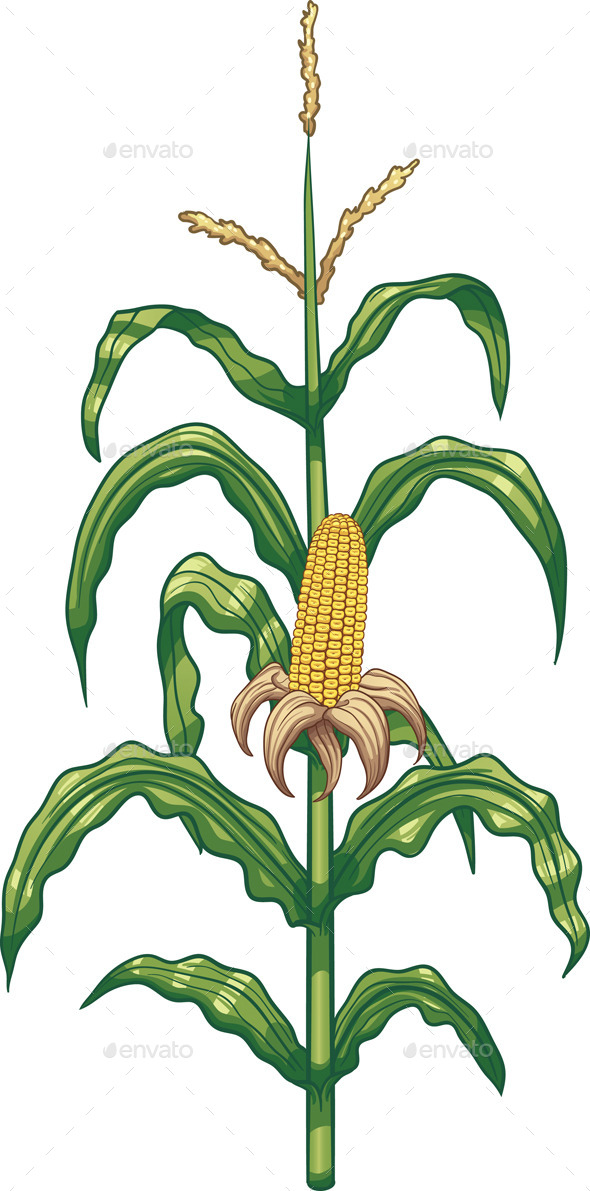 Corn Plant - Food Objects