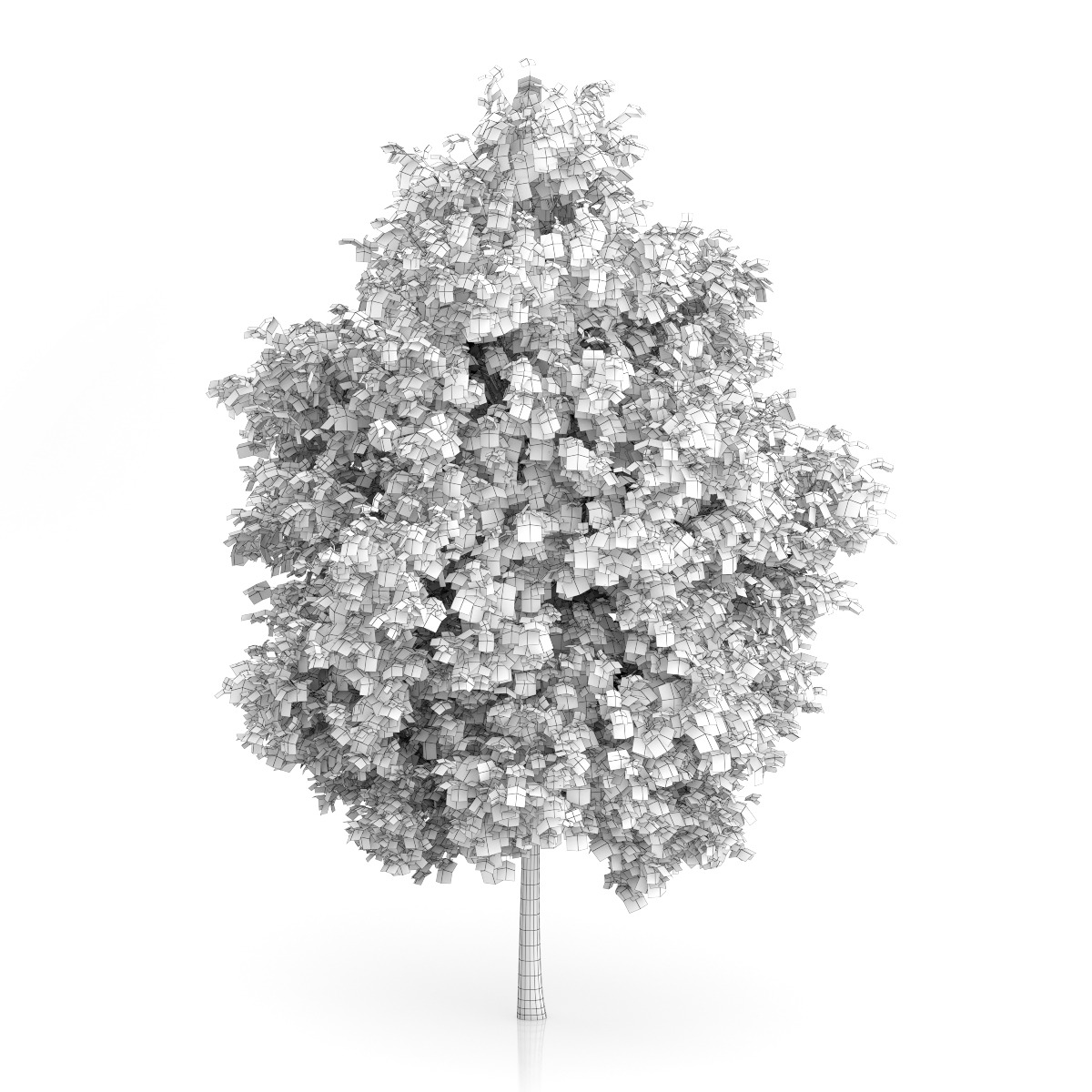 London Plane Tree (Platanus × acerifolia) 8.9m by CGAxis ...