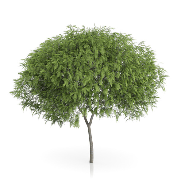 Staghorn Sumac Tree (Rhus typhina) 7.2m - 3DOcean Item for Sale