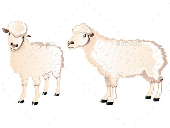 Sheep Character - Animals Characters