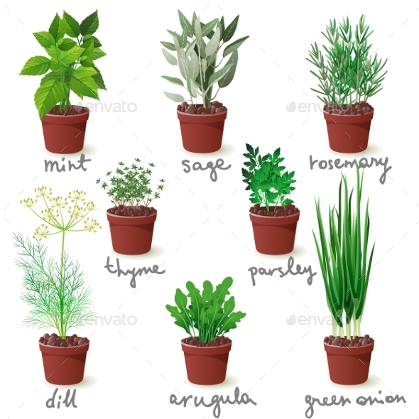 Herbs in Pots - Flowers & Plants Nature