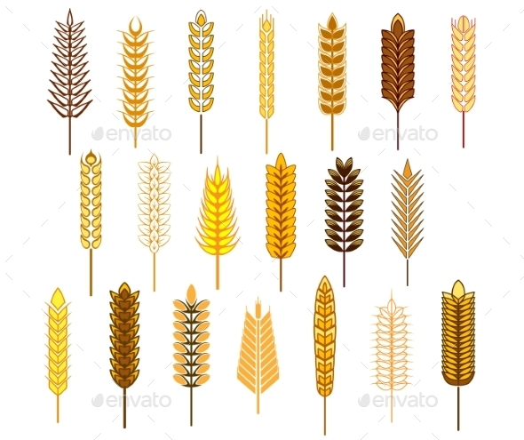 Ears of Cereals and Grain Icons Set - Seasons Nature