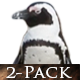 African Penguins on the Beach - VideoHive Item for Sale