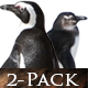 Penguins on South African Beach - VideoHive Item for Sale