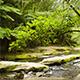 Rainforest Stream - VideoHive Item for Sale
