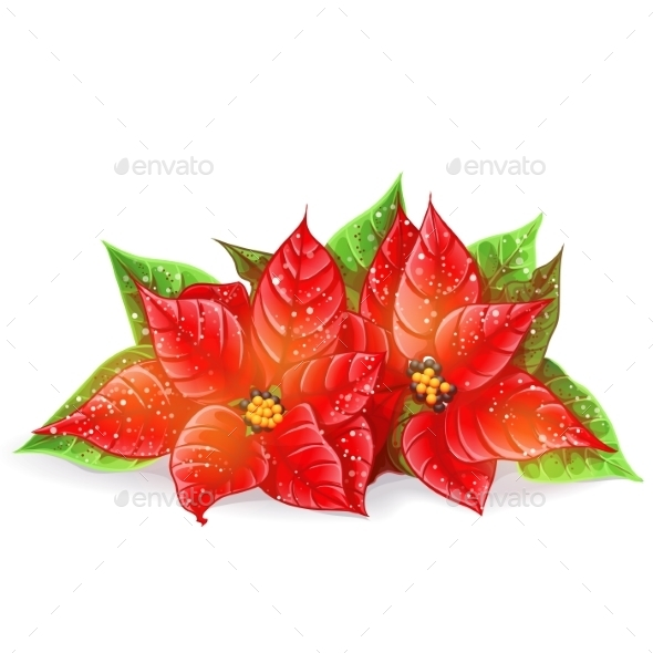 Christmas Flowers - Christmas Seasons/Holidays