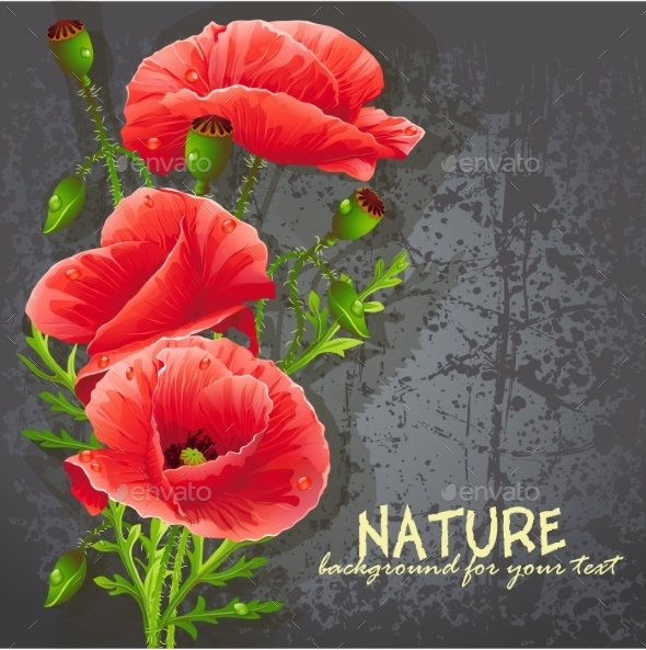 Red Poppies - Flowers & Plants Nature