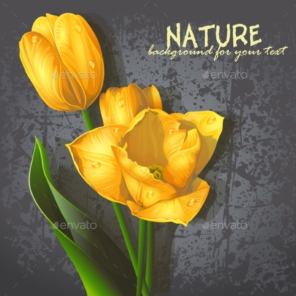 Background for Yellow Tulips - Seasons Nature