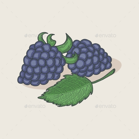 Blackberries and Leaf - Food Objects