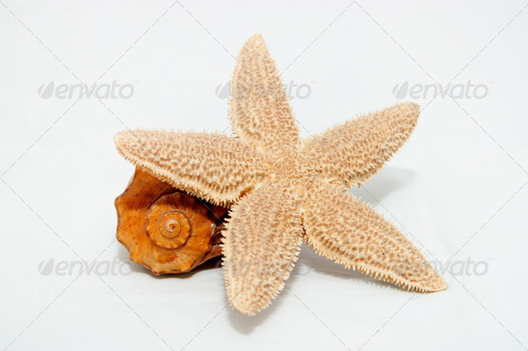 Sea star and shell - Stock Photo - Images