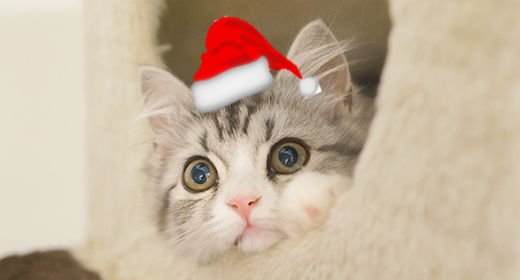 Cats Sing Christmas Song