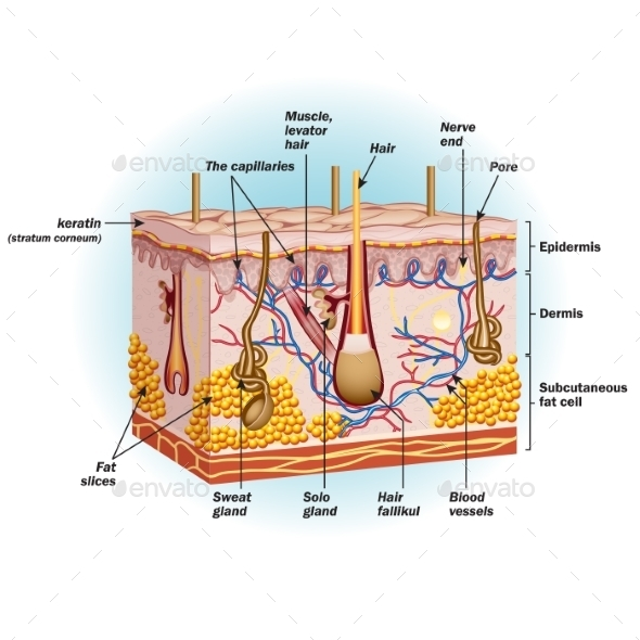 Structure of Human Skin Cells - Health/Medicine Conceptual