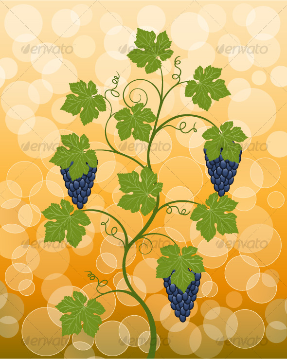 Floral background with a vine - Flowers & Plants Nature