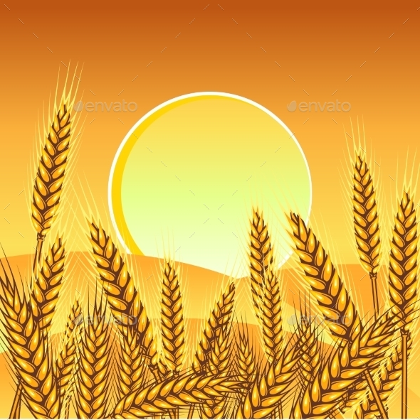 Background with Ripe Yellow Wheat Ears - Landscapes Nature