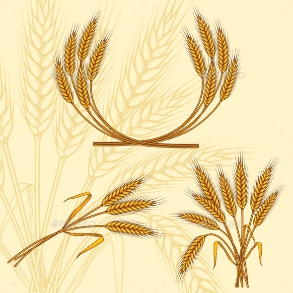 Background with Ripe Yellow Wheat Ears - Flowers & Plants Nature