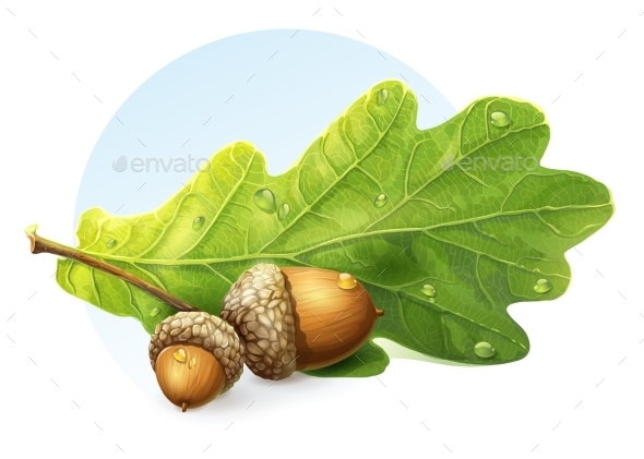 Acorns - Nature Conceptual
