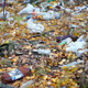 Garbage Among Autumn Leaves In Forest - VideoHive Item for Sale