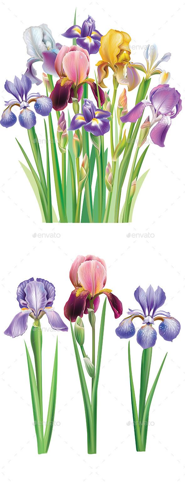 Bouquet of Iris Flowers - Flowers & Plants Nature