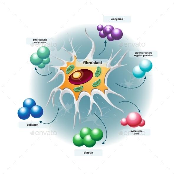 Structure of Fibroblast Cells - Health/Medicine Conceptual