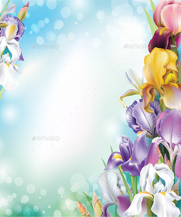 Background with Iris Flowers - Flowers & Plants Nature
