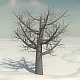 Dead Elm Tree - 3DOcean Item for Sale