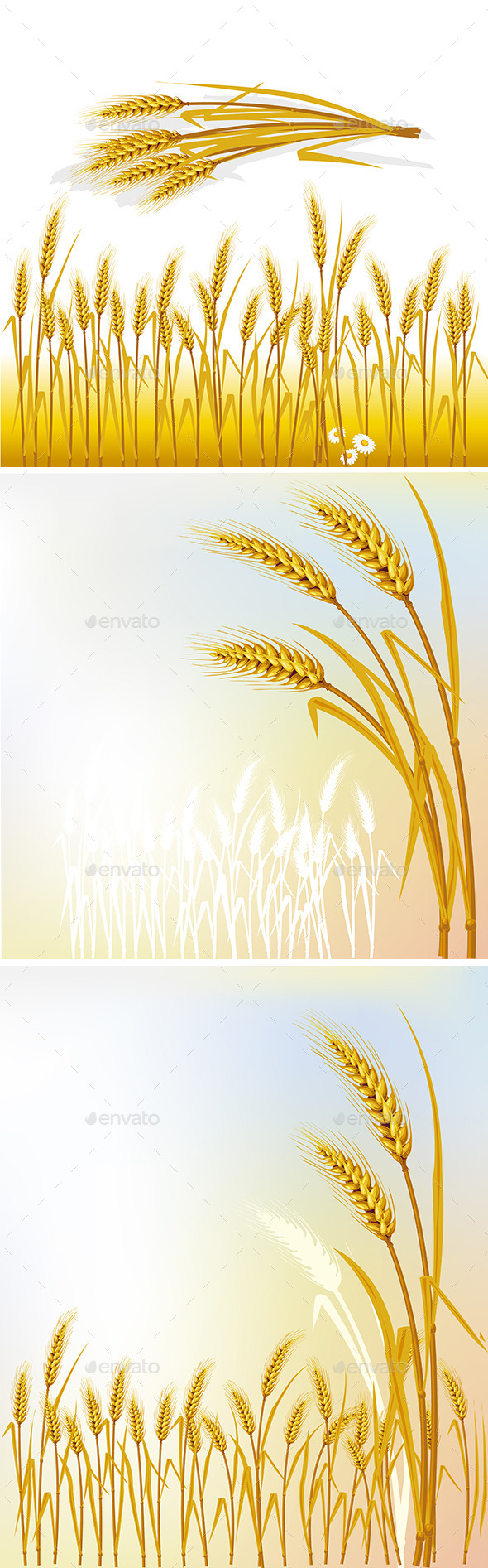 Set of Backgrounds with Wheat - Flowers & Plants Nature
