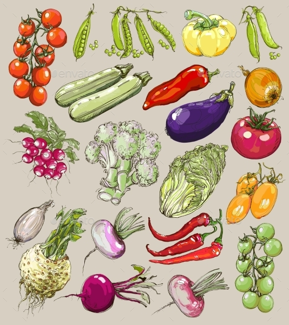 Collection of Hand-Drawn Vegetables - Web Technology