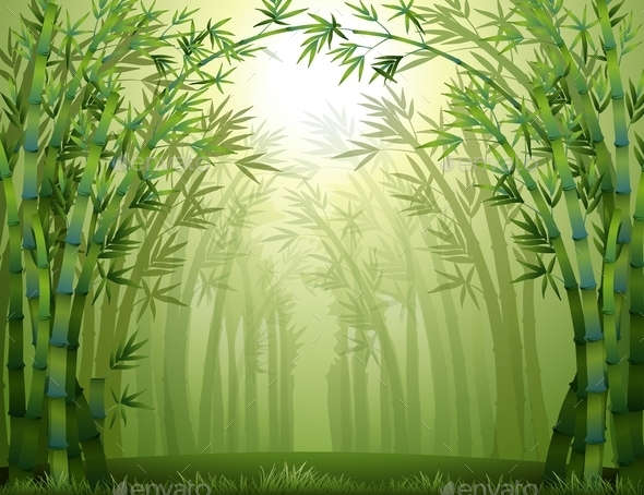 Bamboo Trees - Landscapes Nature