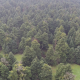 Over Fir Trees - VideoHive Item for Sale