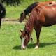 Fantastic Horses - VideoHive Item for Sale