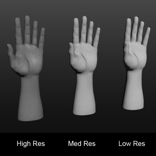 3D Hand Model - 3DOcean Item for Sale