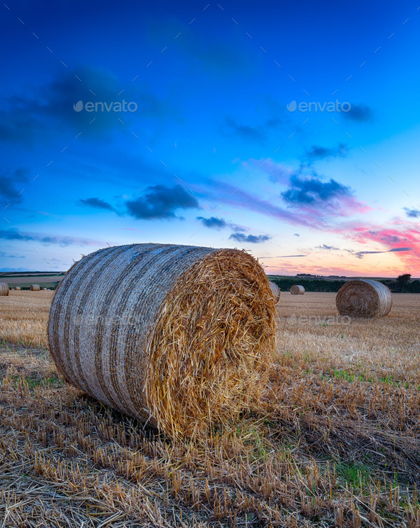 Cornwall Countryside - Stock Photo - Images