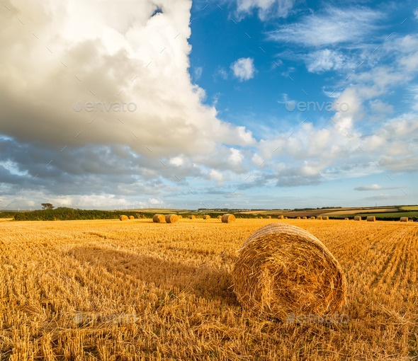 Hay Bales - Stock Photo - Images