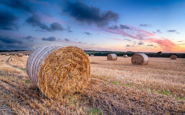 Harvest Sunset - Stock Photo - Images