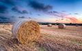 Harvest Sunset - PhotoDune Item for Sale