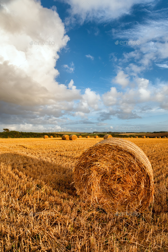 Harvest Time - Stock Photo - Images