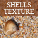 Shells Texture - GraphicRiver Item for Sale