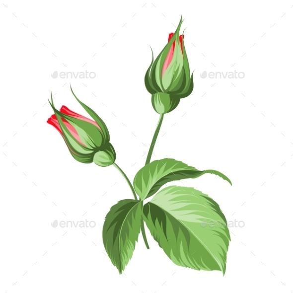 Hand Drawn Rose. - Valentines Seasons/Holidays